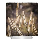 Foxtails In The Marsh Shower Curtain