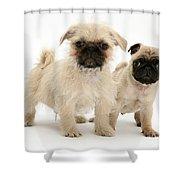 Pugzu And Pug Puppies Shower Curtain