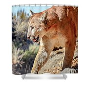 Puma Mountain Lion Nature Wear Shower Curtain
