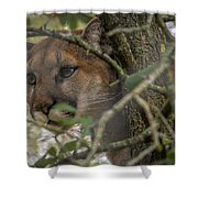 Puma Stalking Shower Curtain