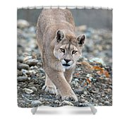 Puma Walk Shower Curtain