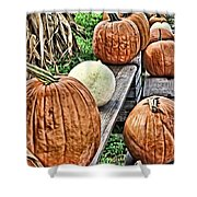 Pumkins In A Row Shower Curtain