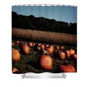 Pumpkin Field Shadows Shower Curtain