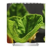 Pumpkin Leaf 2 Shower Curtain