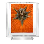Pumpkin Stem Poster Shower Curtain