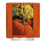 Pumpkin Still Life  Shower Curtain