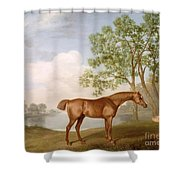 Pumpkin With A Stable-lad Shower Curtain by George Stubbs