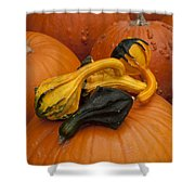 Pumpkins And Gourds Shower Curtain