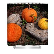Pumpkins For October  Shower Curtain