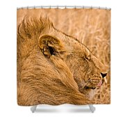 Punk Mane Shower Curtain by Adam Romanowicz