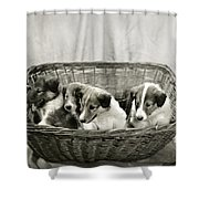 Puppies Of The Past Shower Curtain