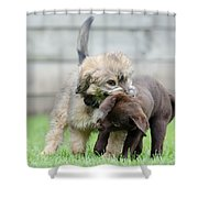 Puppies Playing Shower Curtain