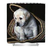 Puppy In A Basket Shower Curtain
