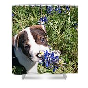 Puppy In The Blubonnets Shower Curtain
