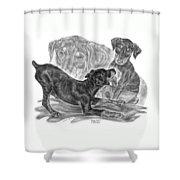 Puppy Love - Doberman Pinscher Pup Shower Curtain