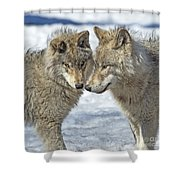 Puppy Love.. Shower Curtain