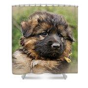 Puppy Portrait II Shower Curtain by Sandy Keeton