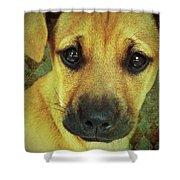 Puppy Portrait Shower Curtain