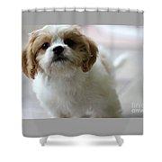 Puppy Sunshine Shower Curtain