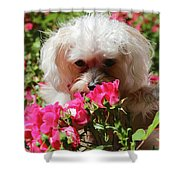 Puppy With Roses Shower Curtain