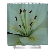 Pure Beautry Shower Curtain