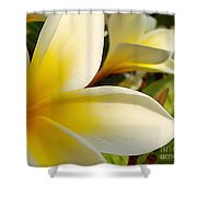 Pure Beauty Plumeria Flowers Shower Curtain