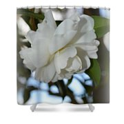 Pure Camelia Shower Curtain