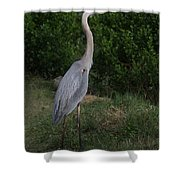 Pure Natural Beauty Shower Curtain