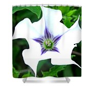 Pure Passion Shower Curtain