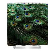 Pure Peacock Shower Curtain