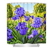 Pure Sapphire Iris Shower Curtain