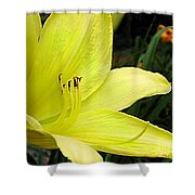 Pure Sunshine Shower Curtain