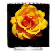 Pure Yellow Petals Shower Curtain