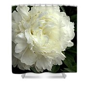 Pureness Shower Curtain by Valeria Donaldson