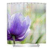 Purple Anemore Flower Shower Curtain