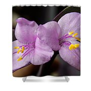 Purple Purple And Yellow Shower Curtain