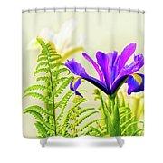 Purple And Blue Iris Shower Curtain