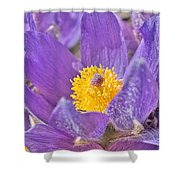Purple And Gold - Bright Shower Curtain