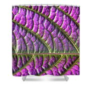 Purple And Green Leaf Shower Curtain