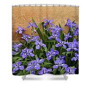Purple And Orange Shower Curtain