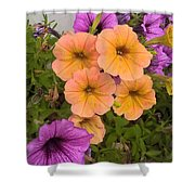 Purple And Peach Shower Curtain