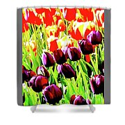 Purple And Peach Tulips 2 Shower Curtain