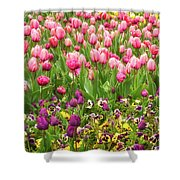 Purple And Pink Tulips In Canberra In Spring Shower Curtain