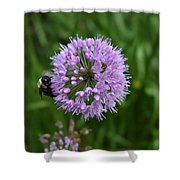 Purple And The Bee Shower Curtain