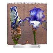 Purple And White Bearded Iris Bud Shower Curtain