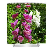 Purple And White Bell Flowers Shower Curtain