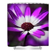 Purple And White Daisy  Shower Curtain