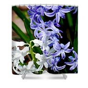 Purple And White Hyacinth Shower Curtain