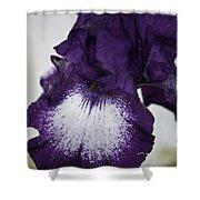 Purple And White Iris Bloom Shower Curtain