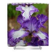Purple And White Iris Layers Shower Curtain